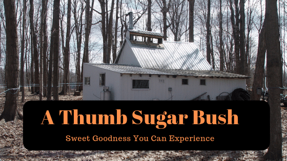 Michigan Maple Syrup from Battel's Sugar Bush